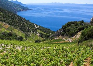 The Hvar Wine Culture Experience